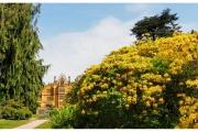 Tyntesfield to posiadłość należąca do organizacji National Trust w Wielkiej Brytanii - Ogrody i kwiaty