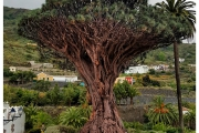 Wyspy Kanaryjskie - Teneryfa i La Gomera. Miejsca pełne atrakcji i niezwykłych widoków.