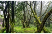Wyspy Kanaryjskie - Teneryfa i La Gomera. Las wawrzynowy - jedno z niewielu takich miejsc na ziemi.