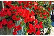 Japonia - Tokio kwiaty
