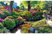 Japonia - Tokio widok na park